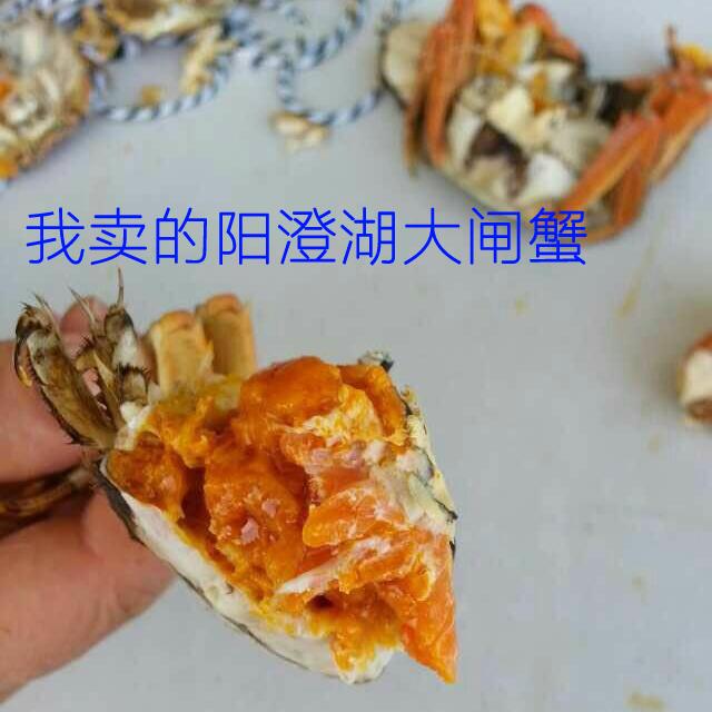 这是第3张阳澄湖大闸蟹招商加盟,招各类网店微商代理的货源图片